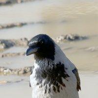 Птичка :: Андрей Словин