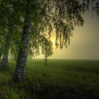 Туманное утро :: Nikita Volkov