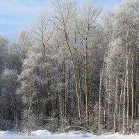 Зима :: Катя Медведева