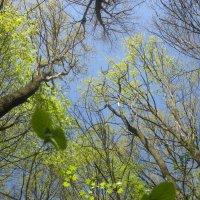 Весенний лес :: Евгения Калинина