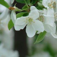 Цветик :: Владимир Гилясев