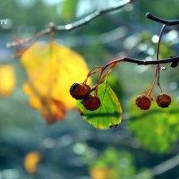 Осень... :: Irina-CITY Trishkina