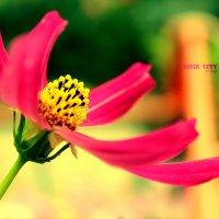 Цветы-моя слабость :: Irina-CITY Trishkina