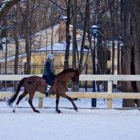 лошади :: Яков Реймер