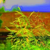 Трава у дома... :: Артём Бояринцев