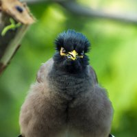 Тайская птичка :: Андрей Зименков