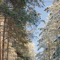 зима :: Борис Устюжанин
