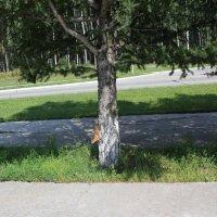 Белочка на дереве :: Наталья Золотых-Сибирская