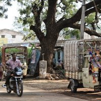 На улицах Индии 3 :: Елена Шацкова