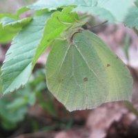 Найди бабочку :: Евгения Калинина