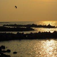 море на закате :: Alexey Romanenko
