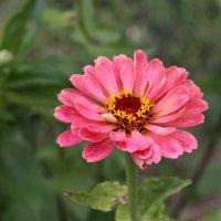 Цветок :: Светлана Борисова