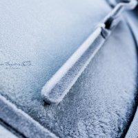 Мороз :: Дарья