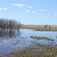 Весенние разливы :: Анатолий Хохлов