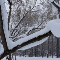 Гнездо :: Сергей Беляев