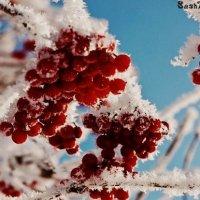 Снег и рябина :: Александра Крюкова(Самойлова)