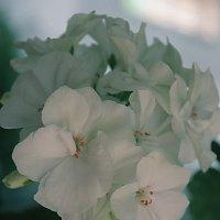 цветы :: Irina-CITY Trishkina