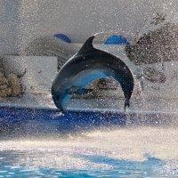 В Севастопольском дельфинарии :: Владимир KVN