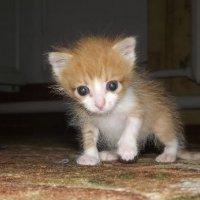 Кошка :: Илья Плотников