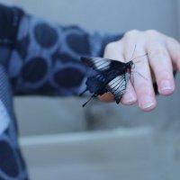 Бабочка-бомж :: Ольга Чазова
