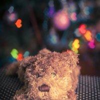 Merry Christmas :: Оксана Гуляева