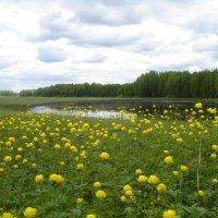 Северное лето :: Анатолий Хохлов