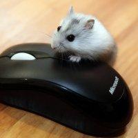 мышки.... :: виктор омельчук