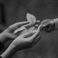 Осень :: Мария Буданова