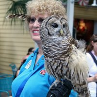 Owl :: Яков Геллер