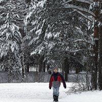 он из леса вышел... :: Олег Петрушов