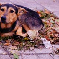 собака :: Юлия Быкова
