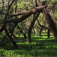 Сломанное дерево :: Lmark