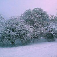 Под снежным покрывалом :: Любовь Белянкина