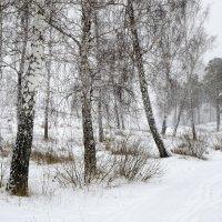Зимний лес II. :: Сергей Адигамов