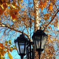 Осенняя подсветка :: Николай Сапегин