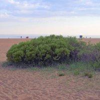 Куст на пляж :: U. South с Я.ру