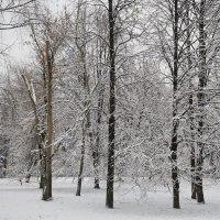 Московская зима. :: Юрий Шувалов