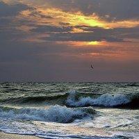 Море Азовское! :: Vladimir Didenko