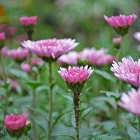 Цветы :: Алина Белич