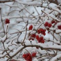зима :: Анастасия Кучина