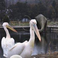 динозавр, пиликаны & лебедь :: Ник Карелин