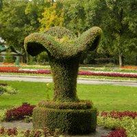Ваза из цветов :: Владимир Кроливец