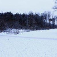 Зимний лес. :: Александр Лейкум