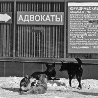 В очереди. А кто тут последний и кто крайний? :: Сергей В. Комаров