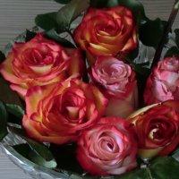 Розы в январе... :: Владимир Павлов