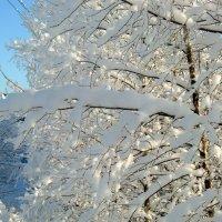Снежные кружева :: Маргарита Дворянникова