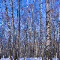 Наконец-то зима! :: Александр Крупский