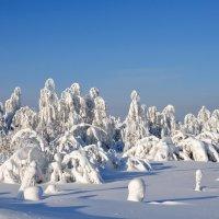 Зимний день :: Анатолий