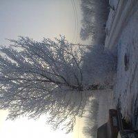 Дерево, просто дерево!!! :: Ярослав Пронский