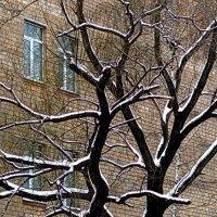 ....Двое.... графика зимы... :: Ира Егорова :)))